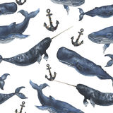 Watercolor seamless pattern with whales and anchor. Illustration with blue whales, cachalot and narwhal isolated on white backgrou Stock Images