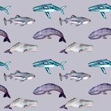 Watercolor seamless pattern with whales stock illustration