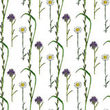 Watercolor seamless pattern with wild flowers. Medecine herbal background. Vector hand drawn Stock Image