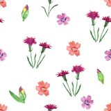 Seamless pattern with wild flowers on a white background. stock images