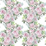 Watercolor seamless pattern. Wild roses mixed background. Romant royalty free illustration