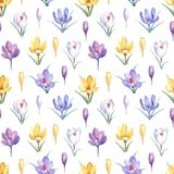 Watercolor seamless pattern with yellow, violet and white crocuses. royalty free illustration