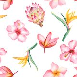 Watercolor seamless tropical pattern. royalty free illustration
