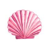 Watercolor Seashell Royalty Free Stock Photos