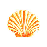 Watercolor Seashell Royalty Free Stock Image