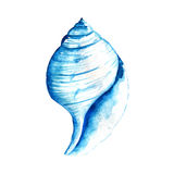 Watercolor Seashell Royalty Free Stock Photos