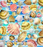 Watercolor Seashell. Seashell on watercolor blue background. Stock Image