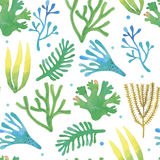 Watercolor seaweeds seamless pattern. On white background Stock Photos