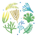 Watercolor seaweeds set. Hand painted on white background Stock Photo