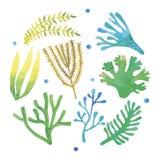 Watercolor seaweeds set Stock Photo