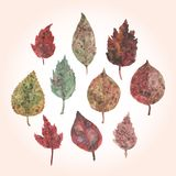 Watercolor set of autumn leaves, paint stains. Royalty Free Stock Photos