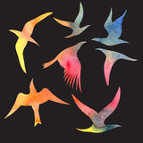 Watercolor set bird Stock Images