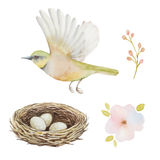 Watercolor set of bird and nest with eggs Stock Image