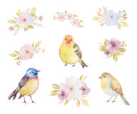 Watercolor set of birds, flowers and bouquets. Stock Photography