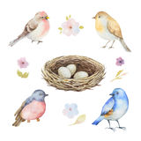 Watercolor set of birds, flowers and socket with eggs. Stock Photos