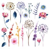 Watercolor set of botanic floral blooming natural elements. Wild. Flowers, twigs and leaves. Botanical bright classic collection isolated on white background vector illustration