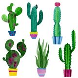 Watercolor set of cacti and succulents flowers royalty free illustration