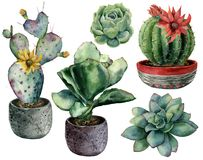 Watercolor set with cactus in a pot and flowers composition. Hand painted cereus, opuntia and echeveria with succulent. Isolated on white background Stock Illustration