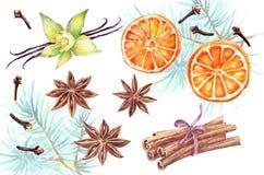 Watercolor set of christmas spice. Anise, cinnamon,vanilla, clove,orange hand painted illustration on white background Stock Photos