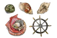 Watercolor set. Collection with seashells Stock Images