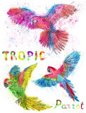 Watercolor set with colorful tropic parrots Stock Photos