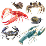 Watercolor set of crustaceans Royalty Free Stock Photo