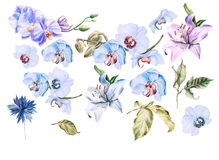 Watercolor set with different flowers orchid, cornflower, lily. Stock Images