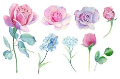 Watercolor set with different roses. Watercolor set with different roses, wild flowers and leaves Stock Photos