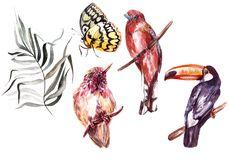 Watercolor set with different tropical birds, butterflies and plants. Illustration Stock Photo