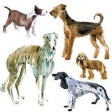 Watercolor set of dogs Stock Images