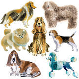 Watercolor set of dogs Royalty Free Stock Image