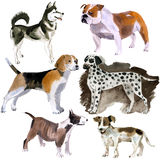 Watercolor set of dogs Stock Photo