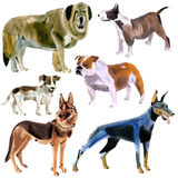Watercolor set of dogs Stock Image
