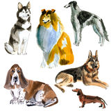 Watercolor set of dogs Royalty Free Stock Images