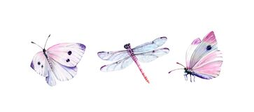 Watercolor set of dragonfly and white butterflies. Realistic insect painting isolated on white. Detailed wings and pink