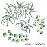 Watercolor set with eucalyptus branch. Hand painted floral illustration with leaves and branches of seeded and silver Royalty Free Stock Image