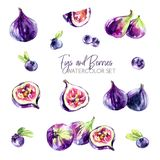 Watercolor borders set with flowers, figs and berries. Original hand drawn illustration in violet shades. Fresh summer. Watercolor set with figs and berries Stock Photos