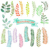 Watercolor set of floral elements and  leaves Royalty Free Stock Images