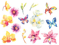 Watercolor set of floral tropical orchid elements. Watercolor set of vintage floral tropical natural elements. Exotic flowers orchid, colorful butterflies Stock Image