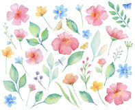 Watercolor set of flowers. Watercolor set of flowers, leaves, branches and butterflies. Elements for design on white background Stock Photos