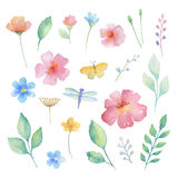 Watercolor set of flowers. Royalty Free Stock Images
