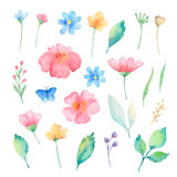 Watercolor set of flowers. Stock Image