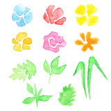 Watercolor set of flowers and leaves Royalty Free Stock Images