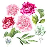 Watercolor set with flowers of roses and leaves. Illustration royalty free stock image