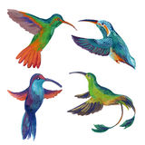 Watercolor set of four colibri. Hand painted illustration of hummingbird in flight Royalty Free Stock Photo