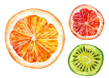 Watercolor set of fresh orange, kiwi and grapefruit Royalty Free Stock Images