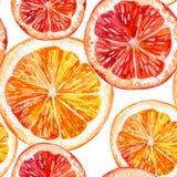 Watercolor set of fresh orange, kiwi and grapefruit Royalty Free Stock Photo