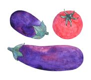 Watercolor set of fresh red-violet vegetables eggplant and tomato