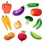 Watercolor set of fresh vegetables vector illustration