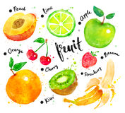 Watercolor set of fruit with lettering. Hand painted watercolor colorful set of fruit with lettering vector illustration